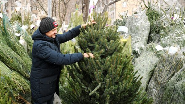 Мужчина выбирает ёлку на елочном базаре в Москве