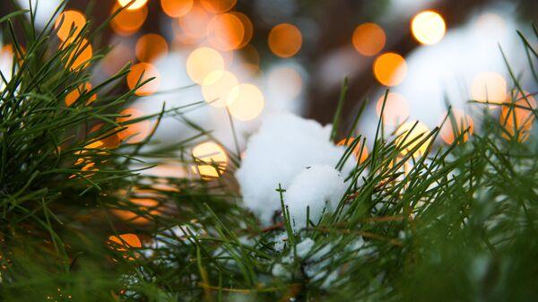 Снег на еловых ветках