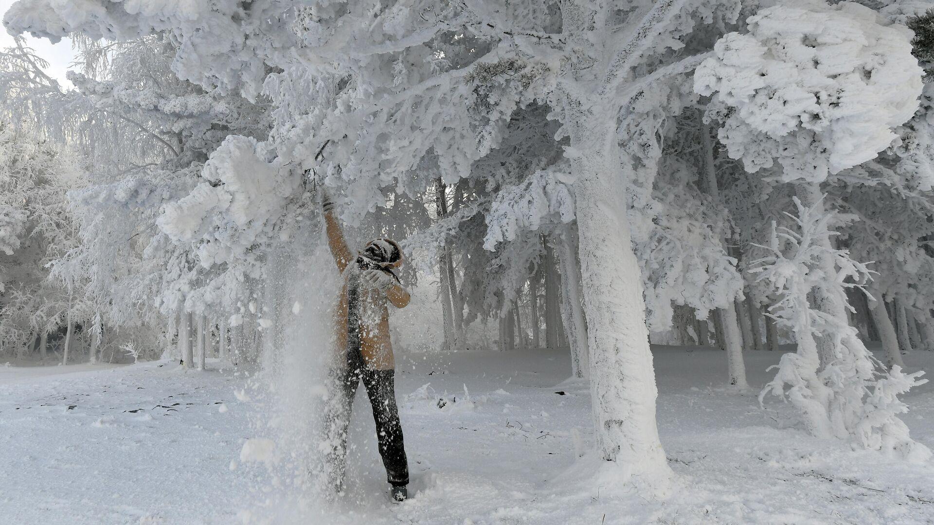 Женщина стряхивает снег с веток во время прогулки в 30-градусный мороз в лесу на берегу Енисея в Красноярском крае - РИА Новости, 1920, 08.01.2021