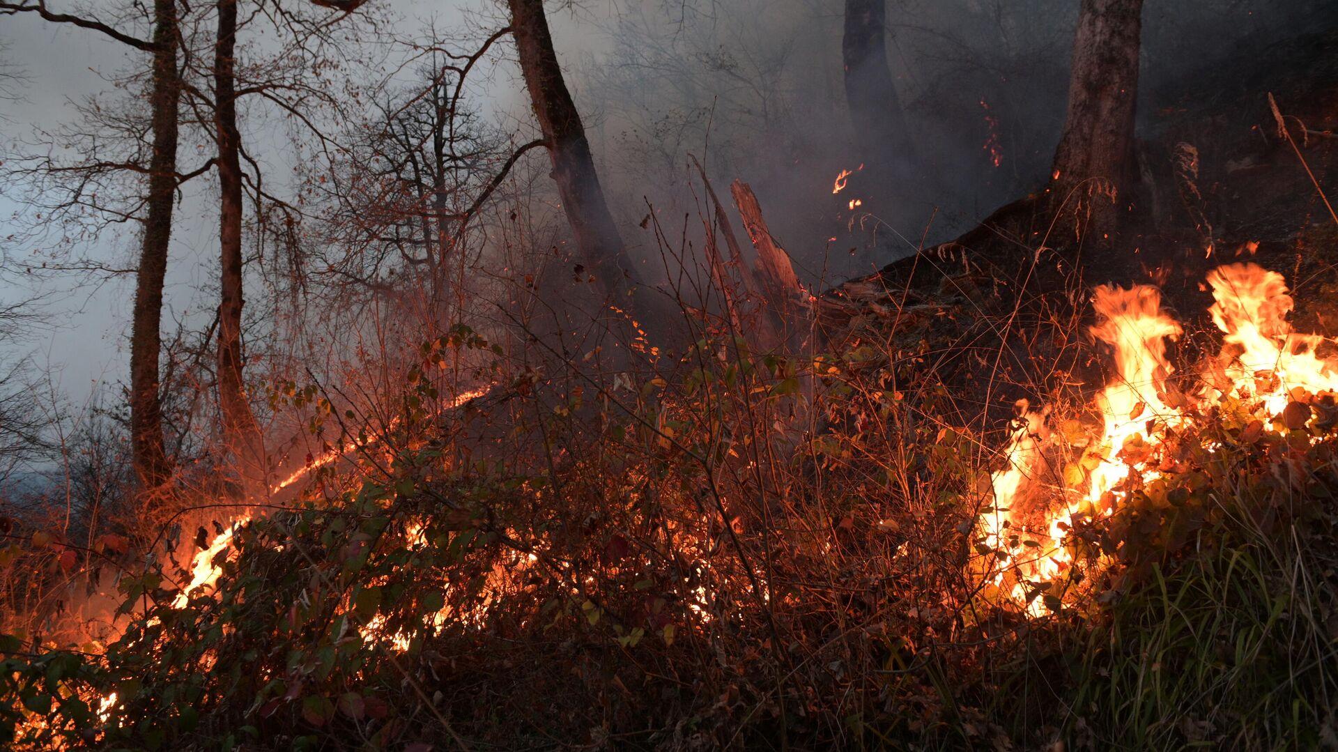 1592134992 0:311:3078:2042 1920x0 80 0 0 534de639943d2c3d1c64825b2f8af386 - Вильфанд назвал регионы с высоким риском природных пожаров