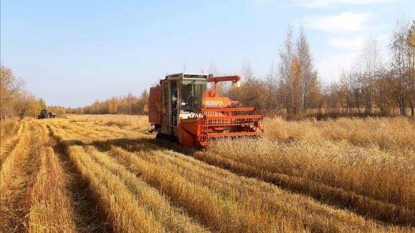 Сбор зерна в Вилюйском районе Республики Саха (Якутия)