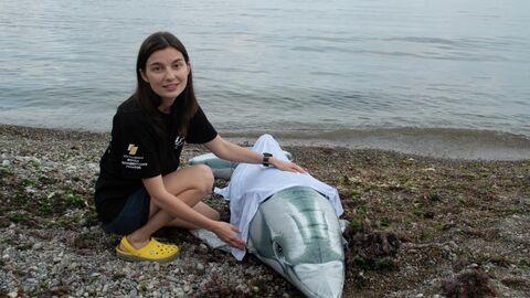 Волонтер для дельфинов