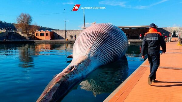 Туша огромного кита у побережья Италии