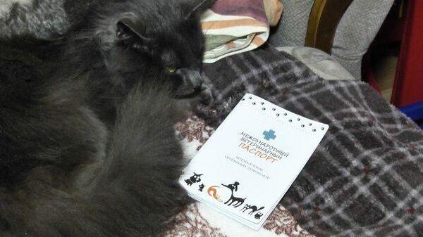 Пять месяцев скитаний: потерявшийся в аэропорту кот Кузя вернулся домой