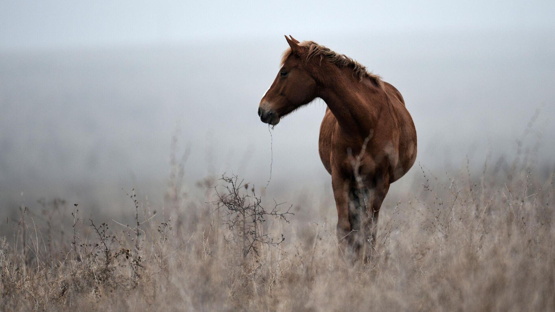 Лошадь пасется в Белогорском районе Крыма - РИА Новости, 1920, 13.09.2021