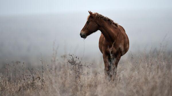 Лошадь пасется в Белогорском районе Крыма