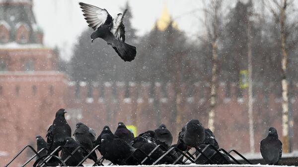 Высота сугробов в Москве в субботу достигнет 60 сантиметров