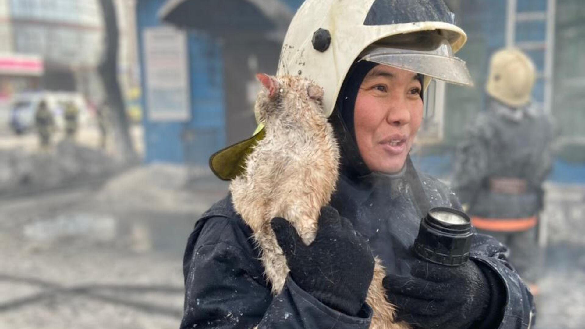 Кот, спасенный во время пожара в Иркутской области - РИА Новости, 1920, 17.02.2021