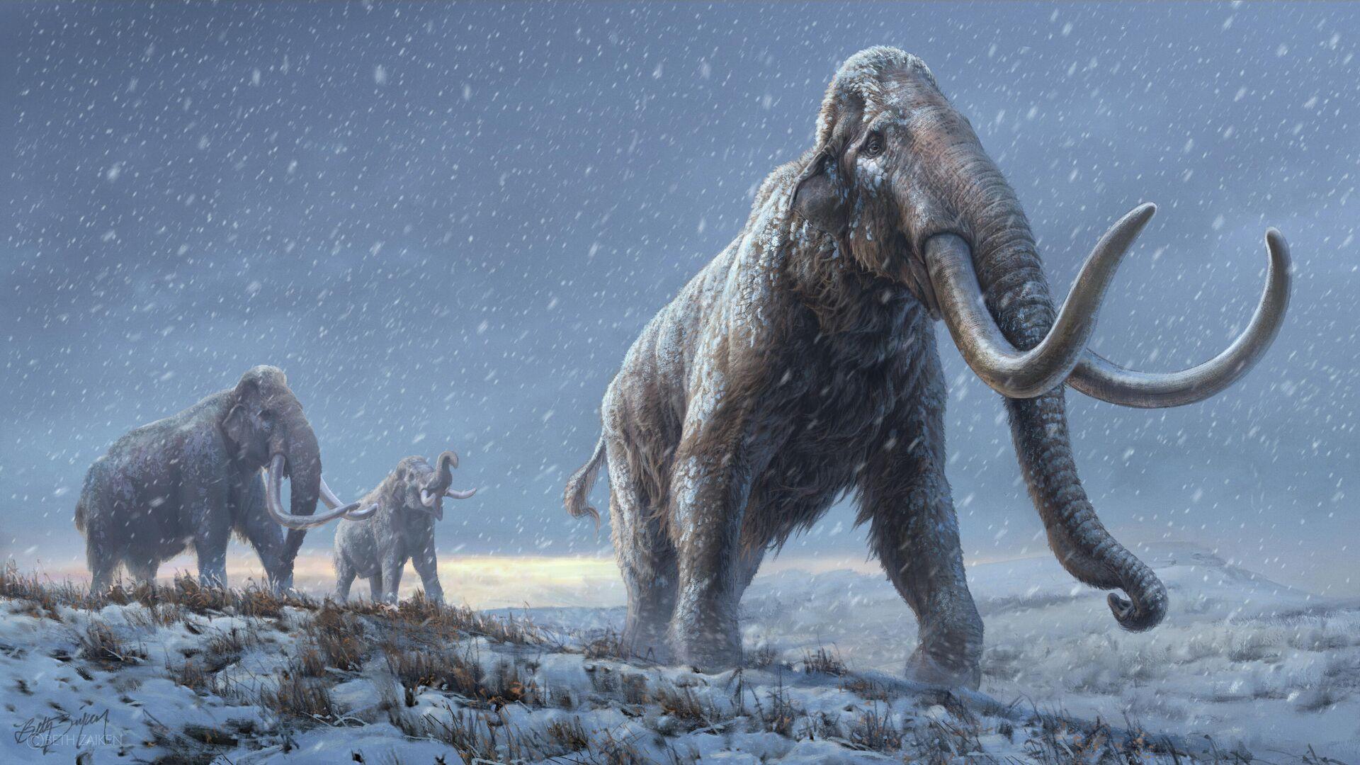 Получена древнейшая ДНК мамонта возрастом более миллиона лет