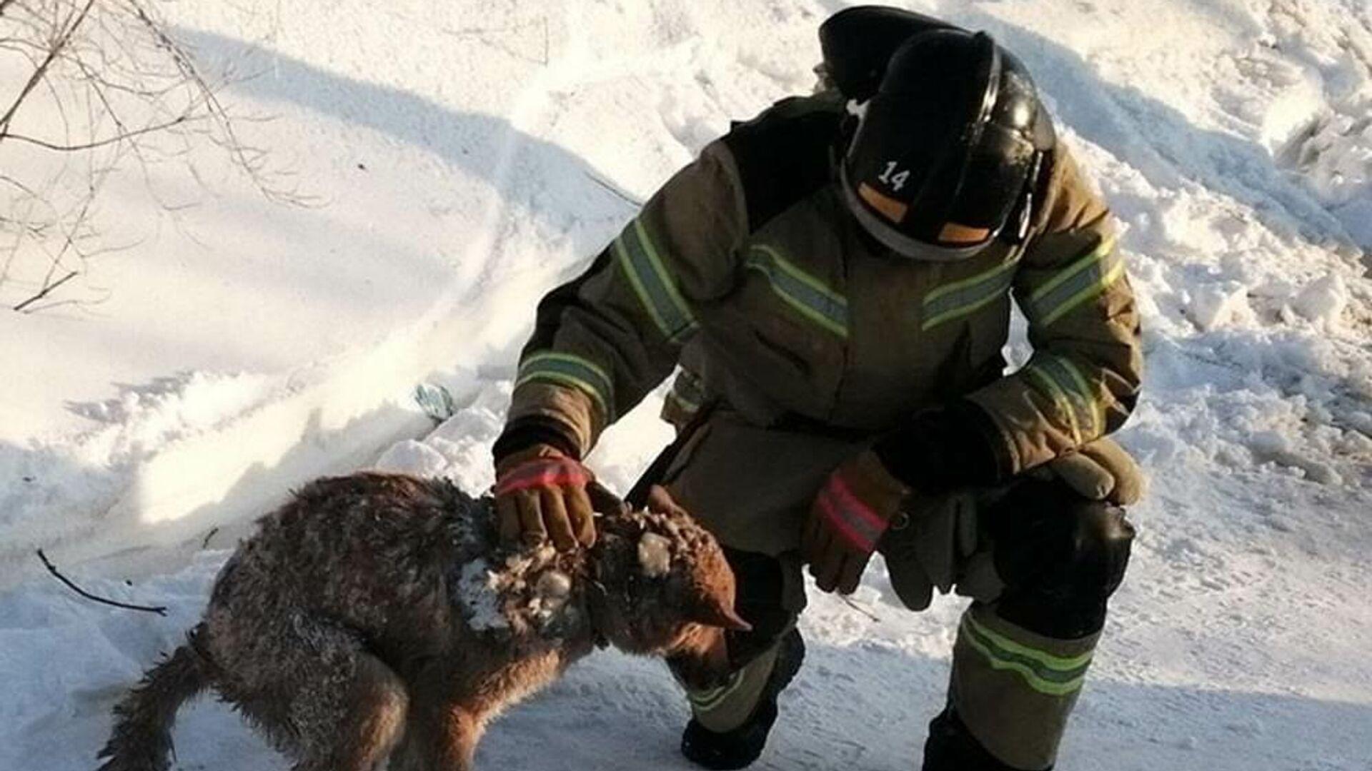 Спасатели в Лабытнанги (ЯНАО) спустя два дня после пожара в жилом доме нашли собаку под завалам - РИА Новости, 1920, 24.02.2021