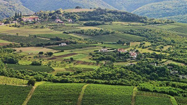 Виноградники в Хорватии