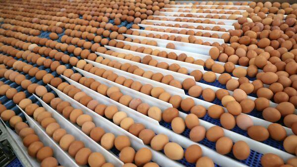 Цех сортировки и упаковки яиц на птицефабрике