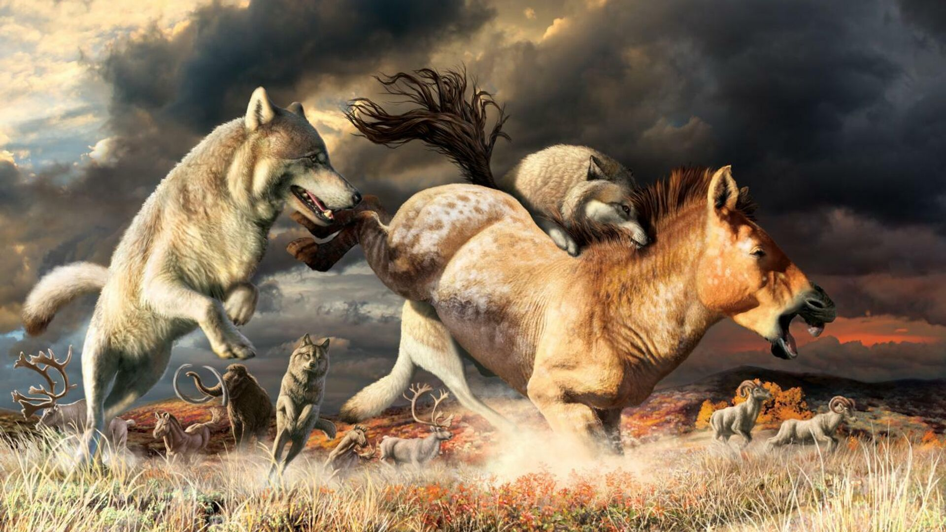 Ученые определили, что помогло волкам пережить ледниковый период