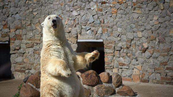 В Ленинградском зоопарке умерла старейшая белая медведица
