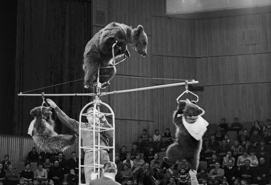 Выступление воздушных гимнастов из медвежьего цирка Валентина Филатова на арене Большого Московского цирка на проспекте Вернадского. 1 апреля 1968 года