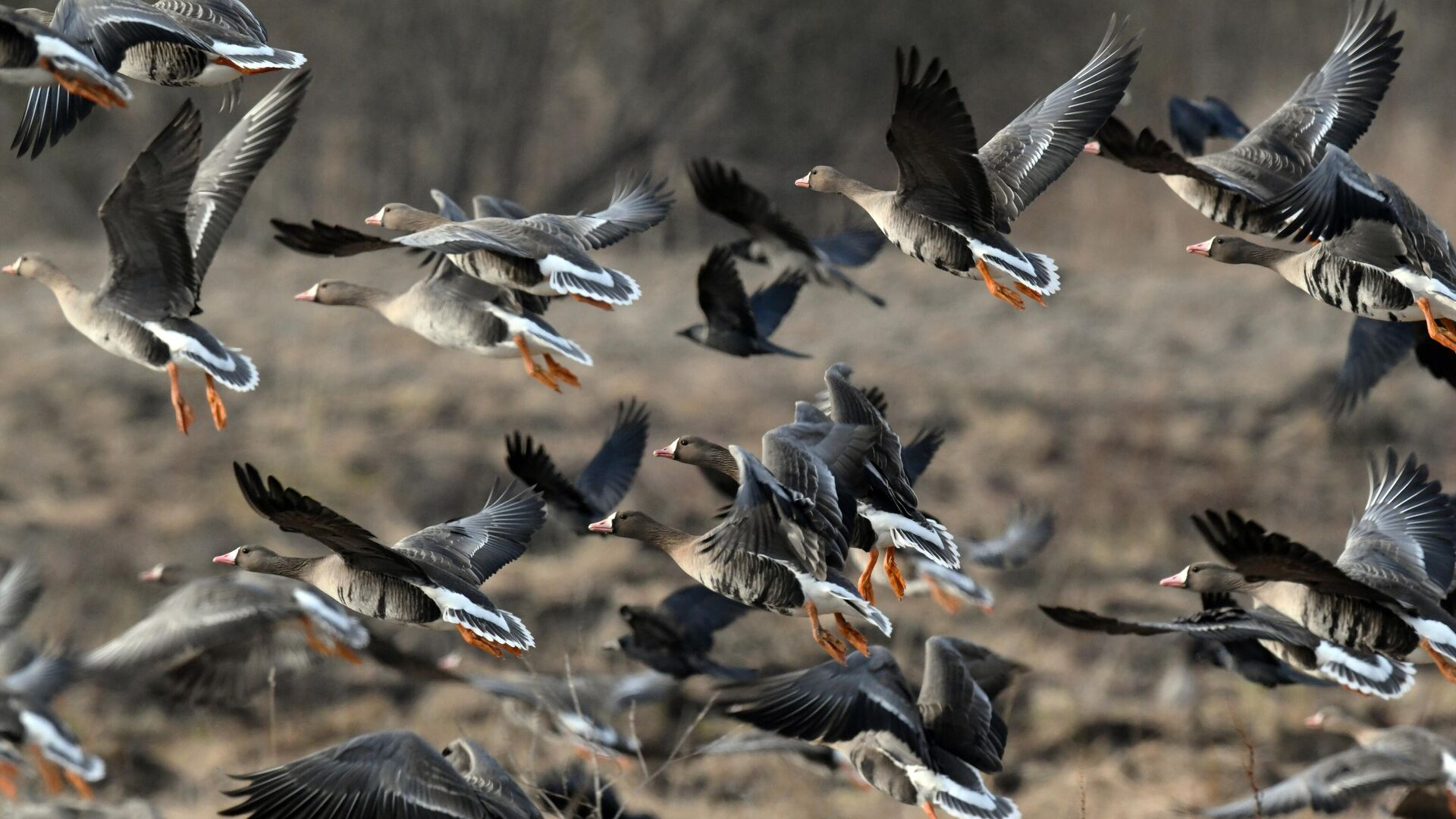 На Чукотке охотник снялся на фоне надписи из сотни убитых гусей