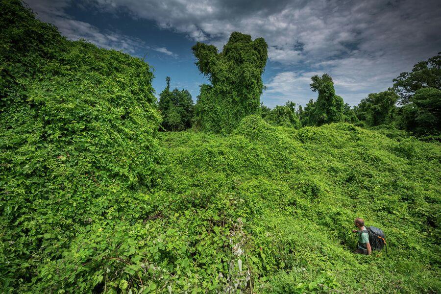 Самурские лиановые леса