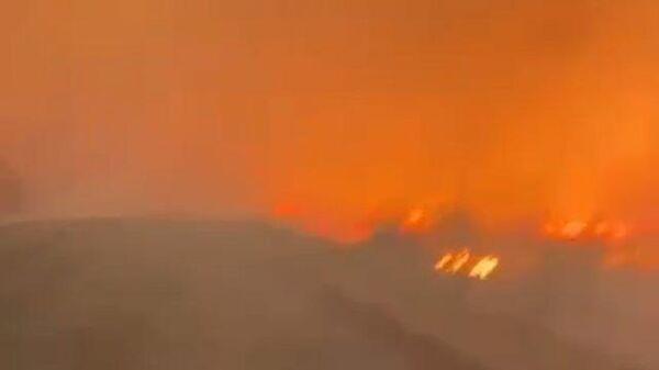 Лес в Тюменской области охвачен огнем