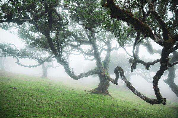 Лавровый лес Мадейры