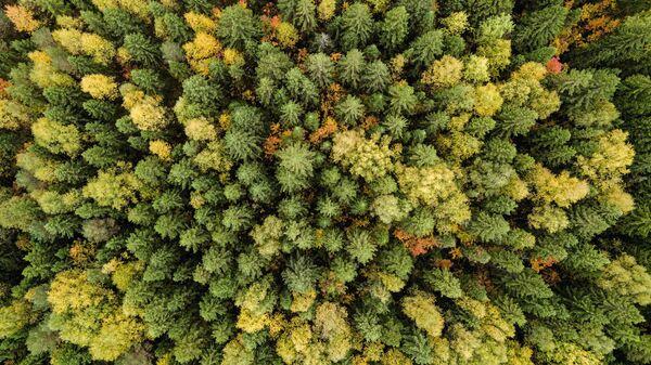 Лес в  Пермском крае.