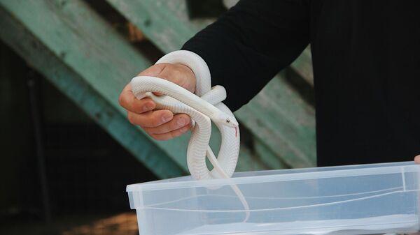 Передача змей из Центра реабилитации Москвы зоопарку Костромы