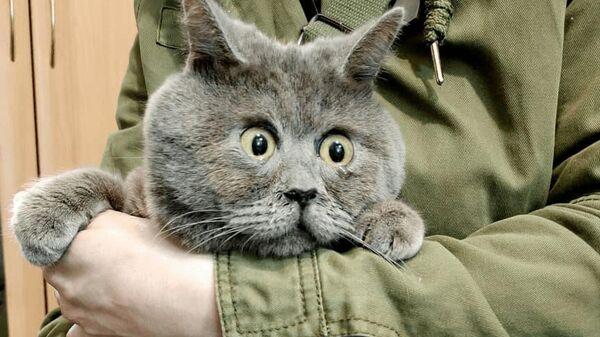 Удивленный кот Федя из Ростовской области