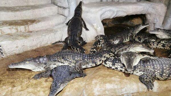 Крокодилы себя чувствуют великолепно: ялтинский крокодиляриум восстанавливается после наводнения
