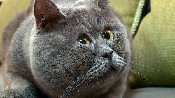 Глаза – два блюдца: кот с особенной внешностью покорил TikTok