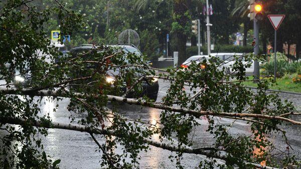 Поваленное во время дождя дерево на проезжей части в Хостинском районе Сочи