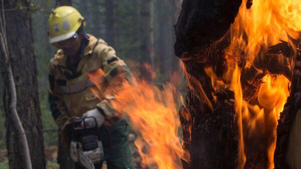 Сотрудник Авиалесоохраны проводит противопожарные мероприятия для препятствия распространению лесных пожаров в Якутии