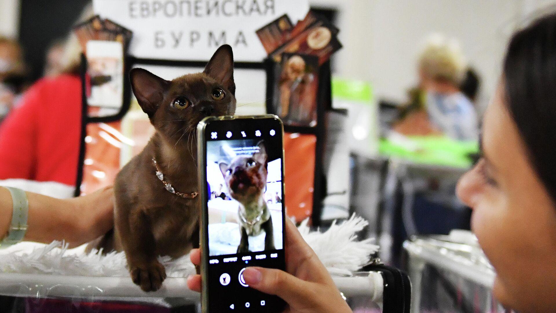 Эксперт рассказал о самых опасных уязвимостях смартфонов