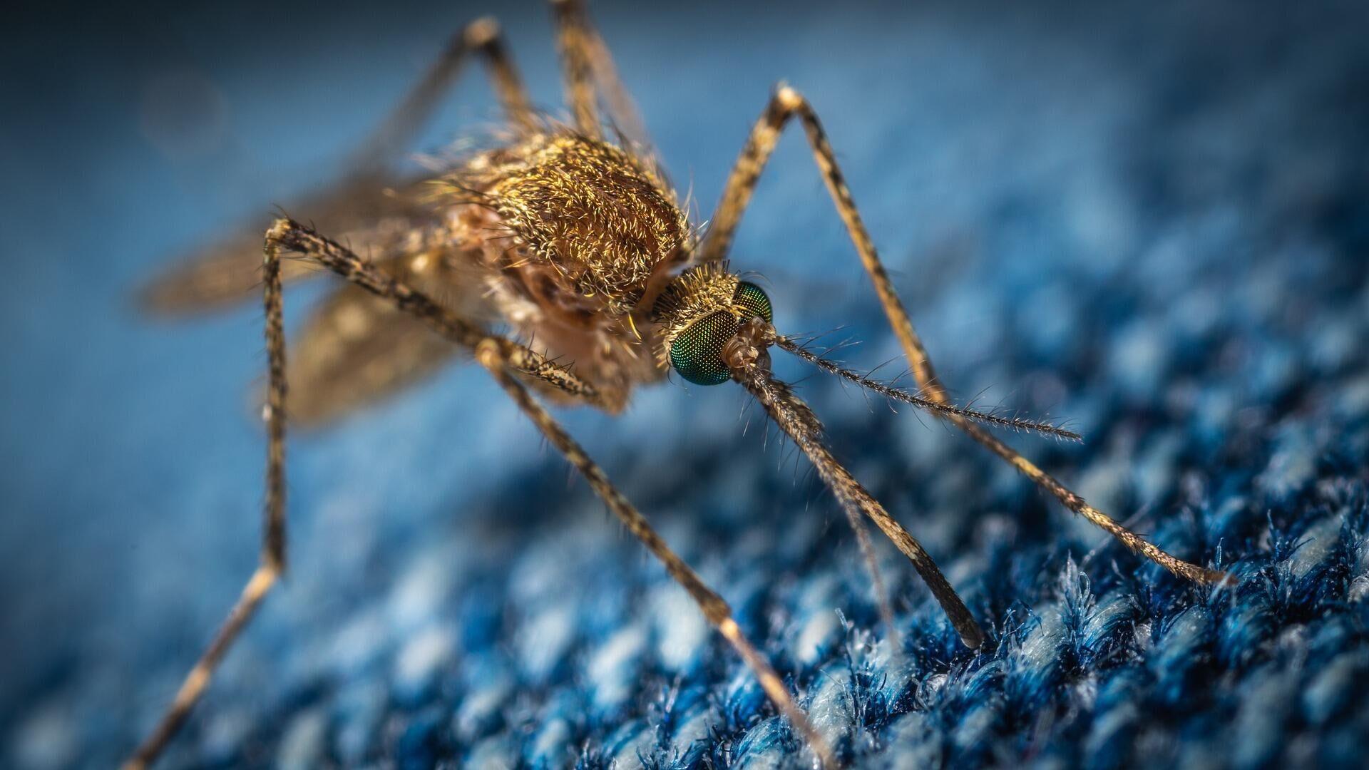 """""""Ядерный удар по комарам"""": как радиация поможет в борьбе с малярией?"""