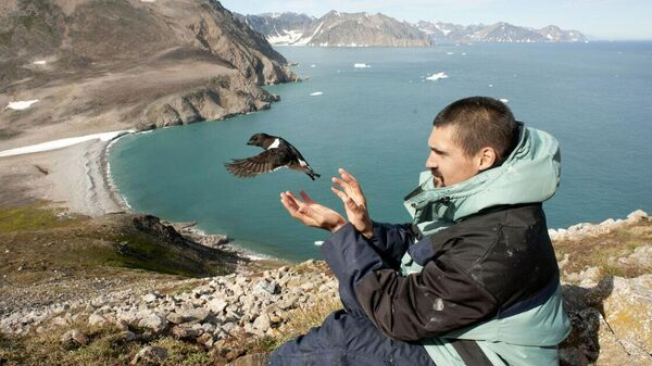 Ученый в Восточной Гренландии надевает кольцо с меткой GLS на лапку птице