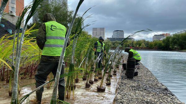 Высадка растений на берегу пруда в Москве