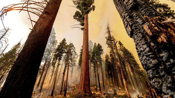 Пожар в Национальном парке Секвойя в штате Калифорнии