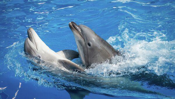 Дельфинарий. Архивное фото