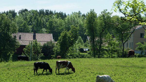 Подмосковные власти выделили 41 млн руб на восстановление заброшенных ферм