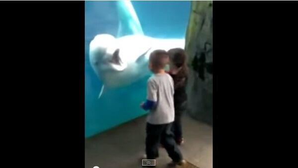 Общительный дельфин привел детей в восторг