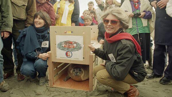 Брижит Бардо во время оказания помощи детенышу Нерпы. Архив
