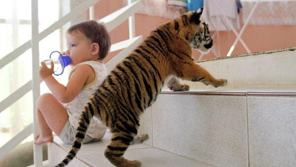 Амурский тигренок в квартире. Архивное фото