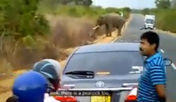 Опоздал, потому что пробки… из-за слонов
