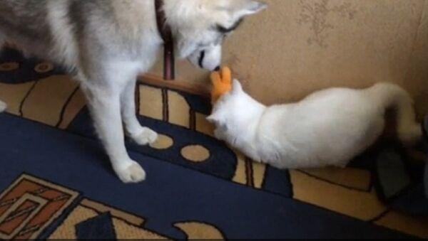 Не играй в мои игрушки, или Жадный кот