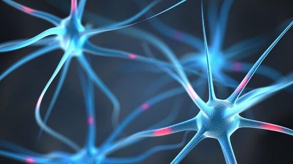 Нейроны в головном мозге человека