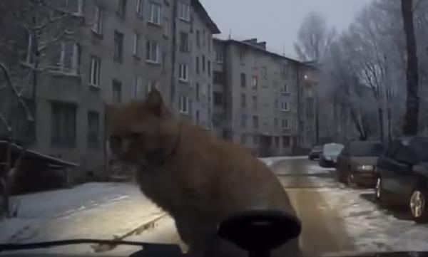 Утренний кот, который потерял совесть