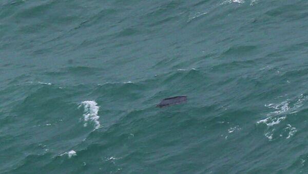 Объект в Яванском море, возможно, являющийся частью фюзеляжа пропавшего самолета авиакомпании Air Asia