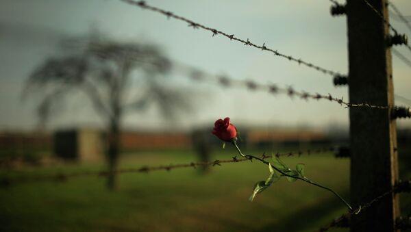 Роза на колючей проволоке в концентрационном лагере Освенцим. Архивное фото