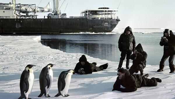 Моряки ледокола Обь фотографируют пингвинов в Антарктиде
