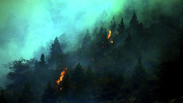 Лесные пожары в Чили. Архивное фото