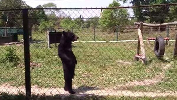 Эй, медведь, ты же не человек!