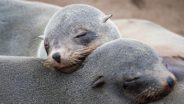 Тюлени. Архивное фото.